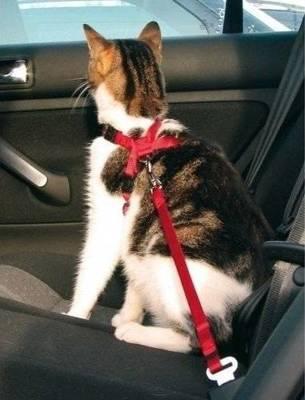TRIXIE Autokėdutės diržai katėms TX-1294